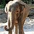 Elephant-Dance