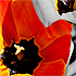 Flower Time - 1