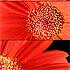 Flower Time - 2