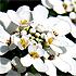 Flower Time - 3